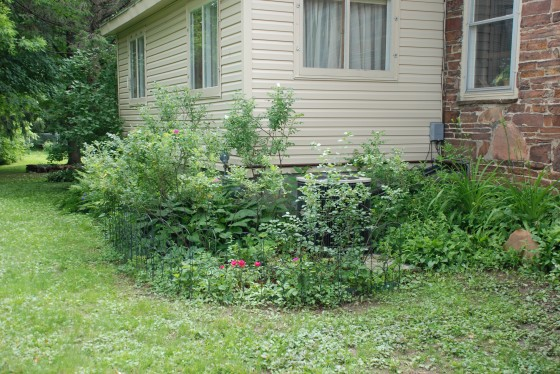 Rose garden before.
